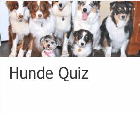 Quiz von einem Schüler der 5. Klasse